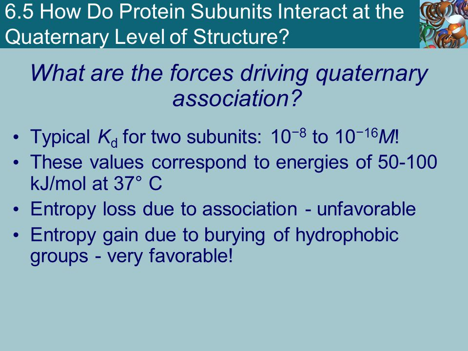 6.5 How Do Protein Subunits Interact at the Quaternary Level of Structure? What are the forces driving quaternary association? Typical K d for two sub