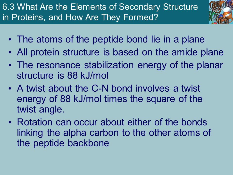 6.3 What Are the Elements of Secondary Structure in Proteins, and How Are They Formed.