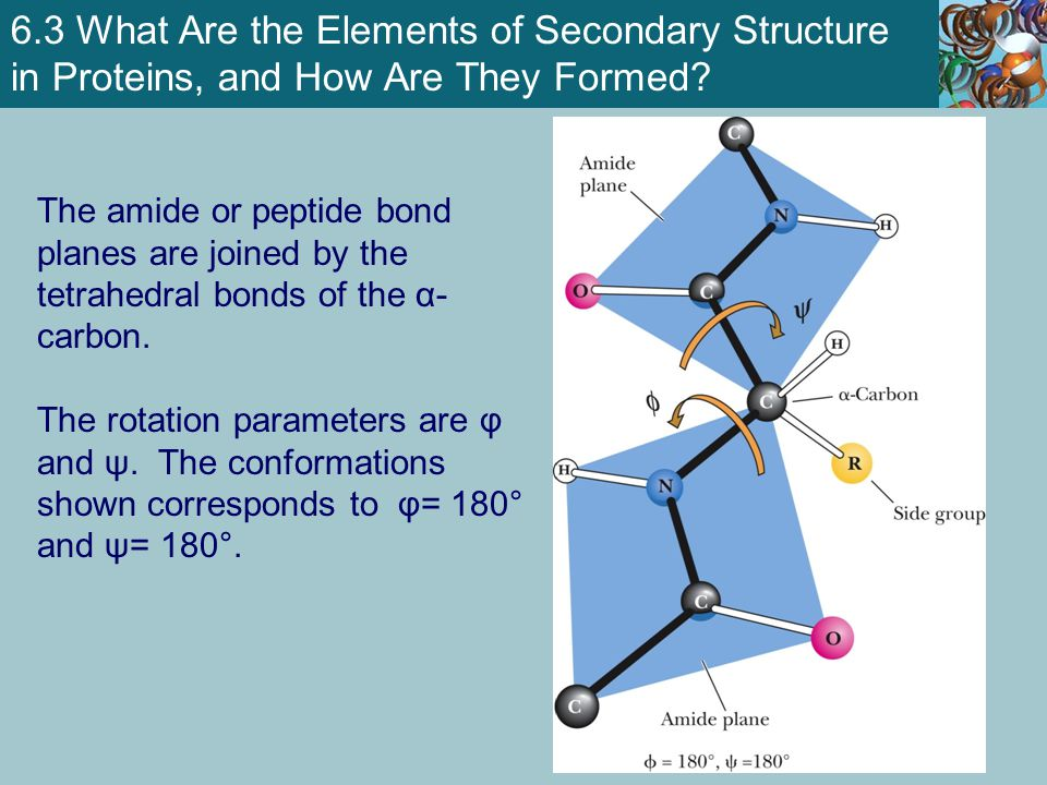 The Protein Folding Energy Landscape Ken Dill has suggested that the folding process can be pictured as a funnel of free energies.