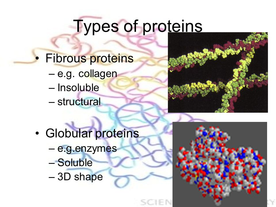 Types of proteins Fibrous proteins –e.g.