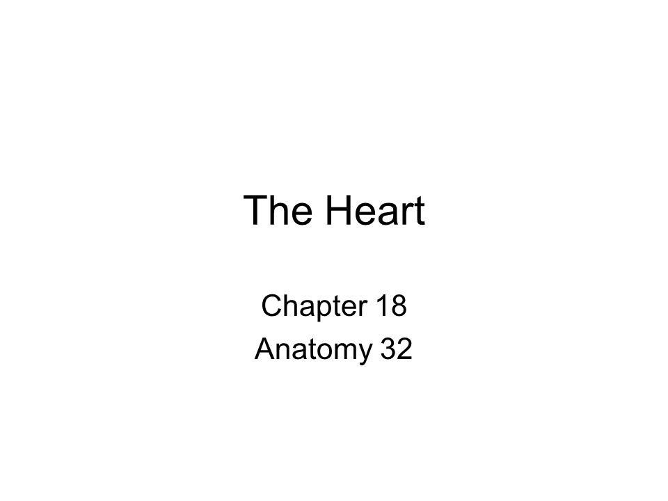 The Heart Chapter 18 Anatomy 32