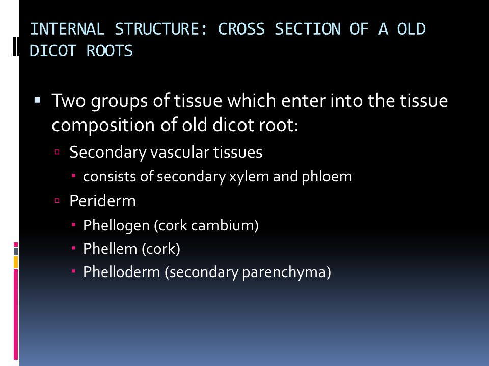 INTERNAL STRUCTURE: CROSS SECTION OF A OLD DICOT ROOTS  Two groups of tissue which enter into the tissue composition of old dicot root:  Secondary v