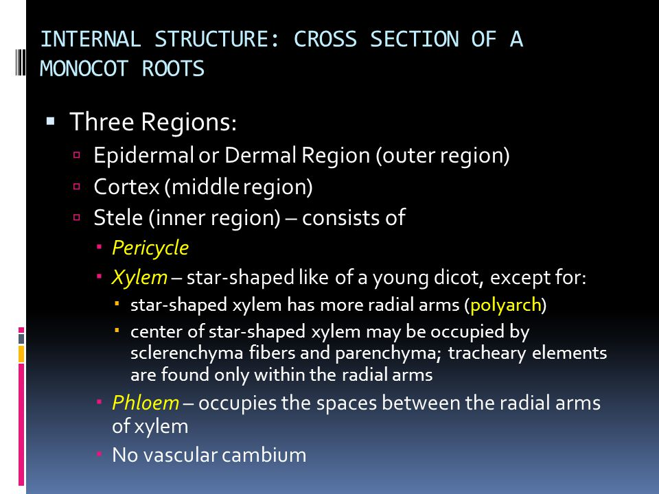 INTERNAL STRUCTURE: CROSS SECTION OF A MONOCOT ROOTS  Three Regions:  Epidermal or Dermal Region (outer region)  Cortex (middle region)  Stele (in