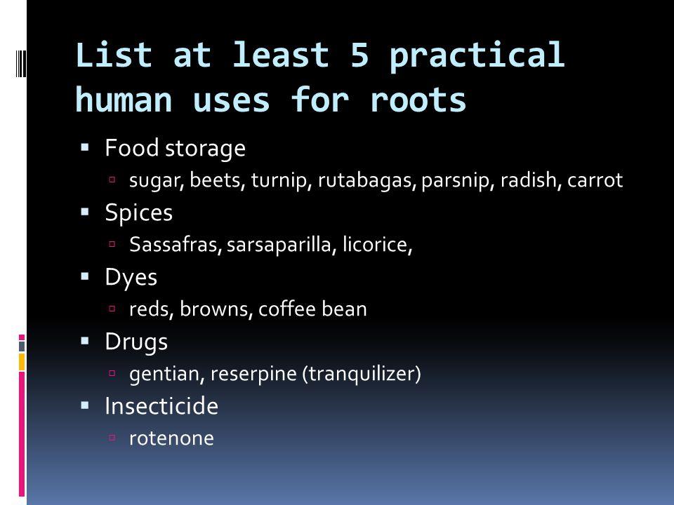 List at least 5 practical human uses for roots  Food storage  sugar, beets, turnip, rutabagas, parsnip, radish, carrot  Spices  Sassafras, sarsapa