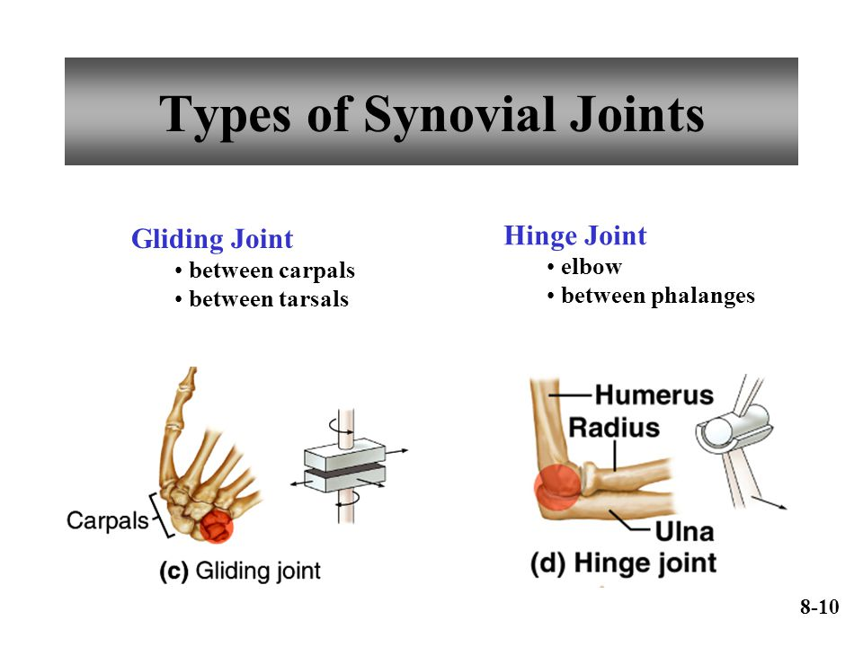 Types of Synovial Joints Gliding Joint between carpals between tarsals Hinge Joint elbow between phalanges 8-10