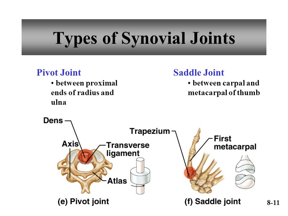 Types of Synovial Joints Pivot Joint between proximal ends of radius and ulna Saddle Joint between carpal and metacarpal of thumb 8-11