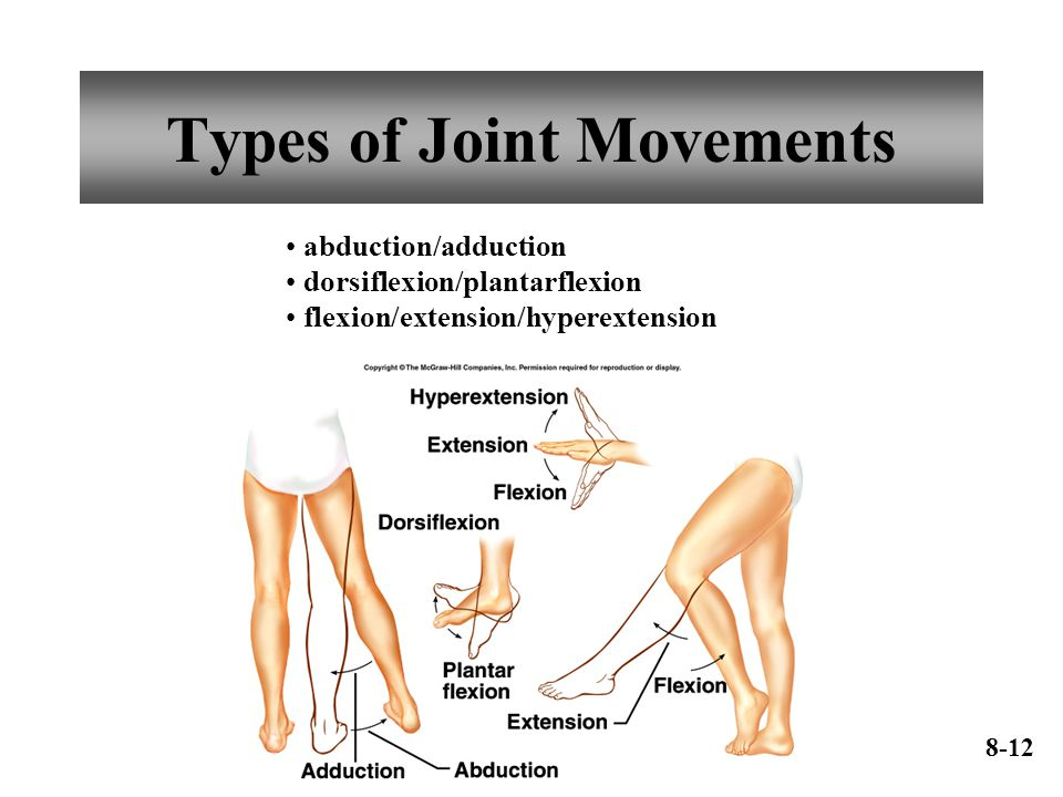 Types of Joint Movements abduction/adduction dorsiflexion/plantarflexion flexion/extension/hyperextension 8-12