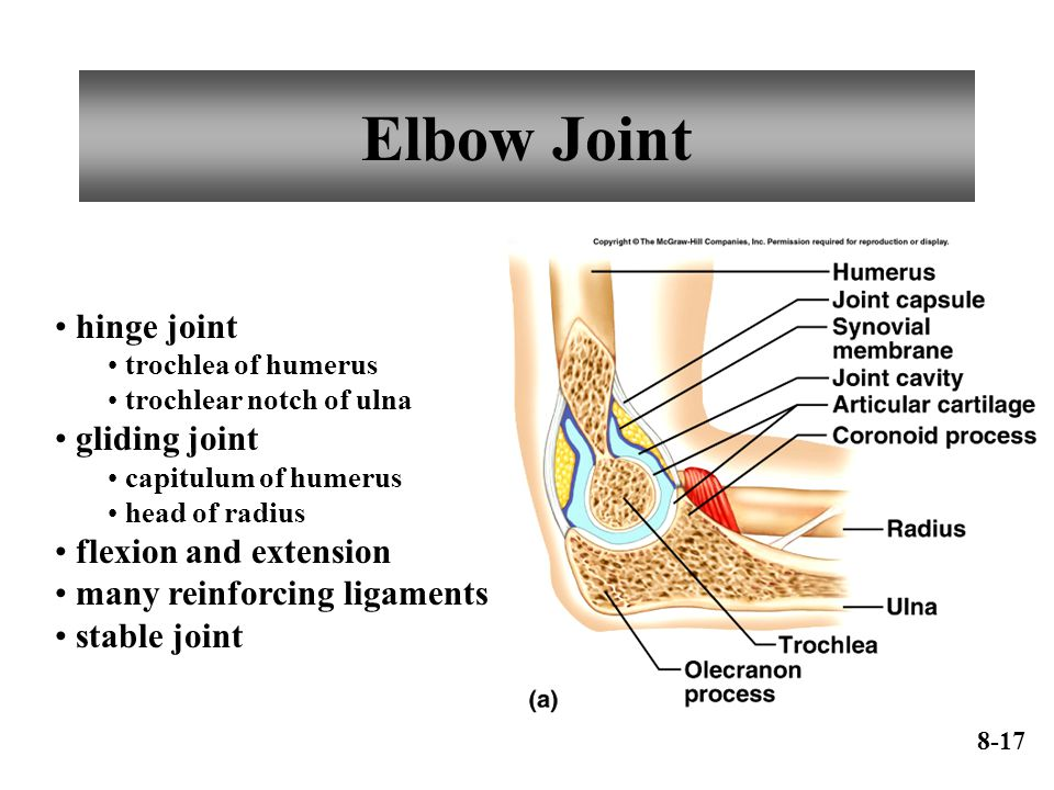 Elbow Joint hinge joint trochlea of humerus trochlear notch of ulna gliding joint capitulum of humerus head of radius flexion and extension many reinforcing ligaments stable joint 8-17