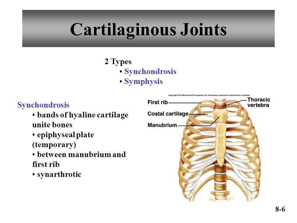 Cartilaginous Joints 2 Types Synchondrosis Symphysis Synchondrosis bands of hyaline cartilage unite bones epiphyseal plate (temporary) between manubrium and first rib synarthrotic 8-6