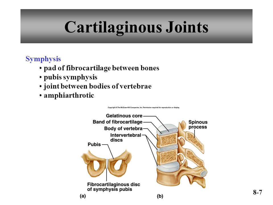 Cartilaginous Joints Symphysis pad of fibrocartilage between bones pubis symphysis joint between bodies of vertebrae amphiarthrotic 8-7