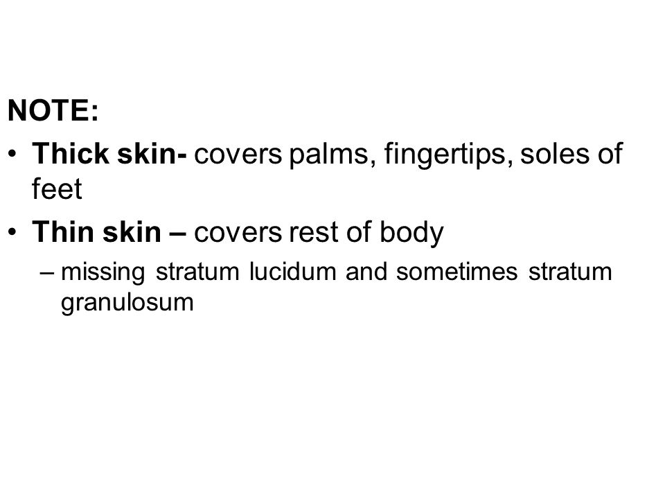 NOTE: Thick skin- covers palms, fingertips, soles of feet Thin skin – covers rest of body –missing stratum lucidum and sometimes stratum granulosum