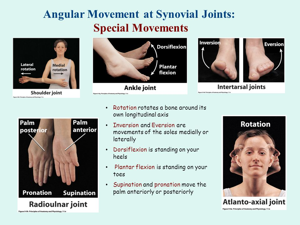 Angular Movement at Synovial Joints: Abduction, Adduction, & Circumduction Abduction is movement away from the midline Adduction is movement toward the midline Circumduction is movement of the distal end of a body part in a circle