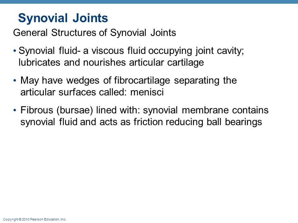Copyright © 2010 Pearson Education, Inc. Synovial Joints General Structures of Synovial Joints Synovial fluid- a viscous fluid occupying joint cavity;