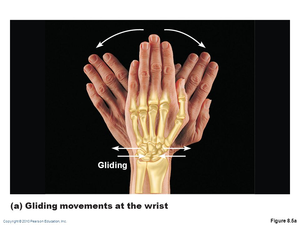 Copyright © 2010 Pearson Education, Inc. Figure 8.5a Gliding (a) Gliding movements at the wrist