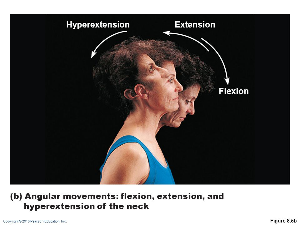 Copyright © 2010 Pearson Education, Inc. Figure 8.5b (b) Angular movements: flexion, extension, and hyperextension of the neck HyperextensionExtension