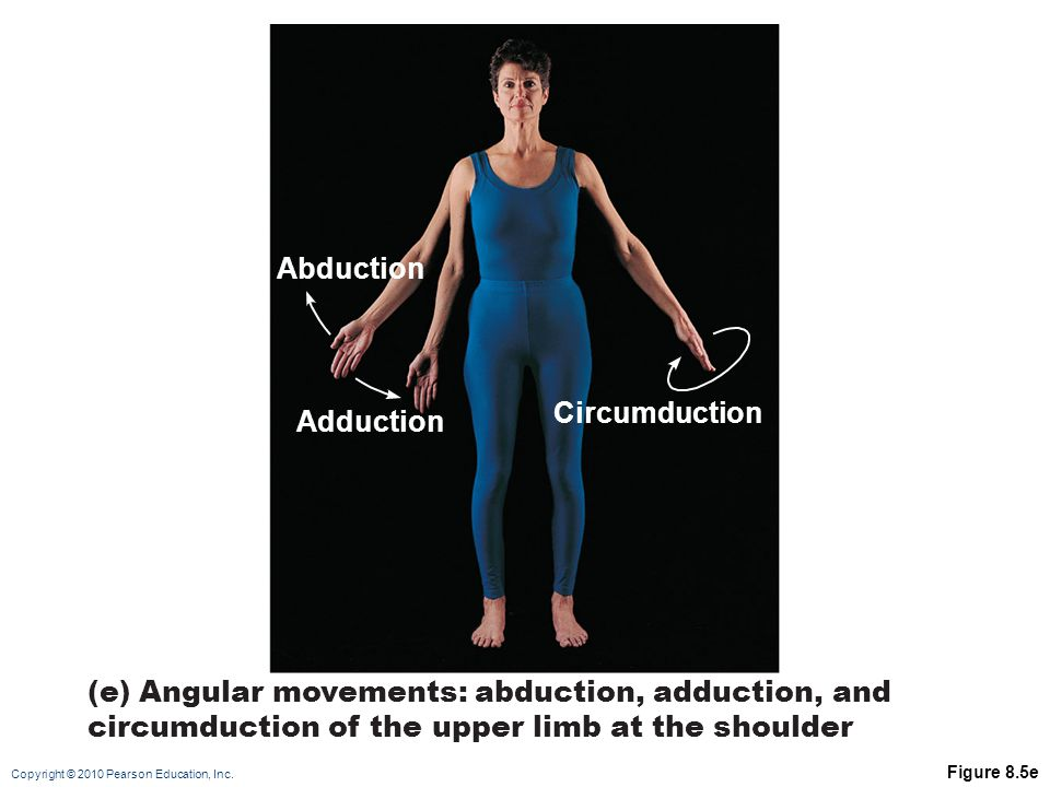 Copyright © 2010 Pearson Education, Inc. Figure 8.5e Abduction Adduction (e) Angular movements: abduction, adduction, and circumduction of the upper l