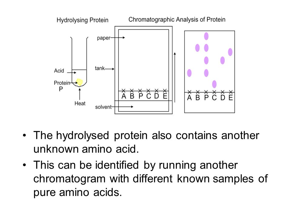 The hydrolysed protein also contains another unknown amino acid.