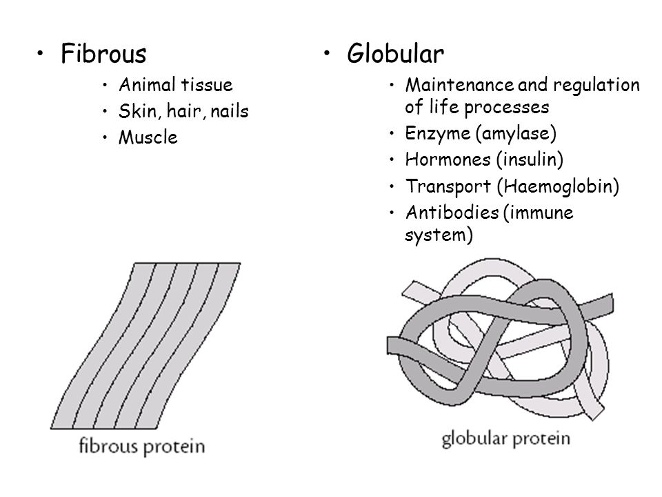 Fibrous Animal tissue Skin, hair, nails Muscle Globular Maintenance and regulation of life processes Enzyme (amylase) Hormones (insulin) Transport (Haemoglobin) Antibodies (immune system)