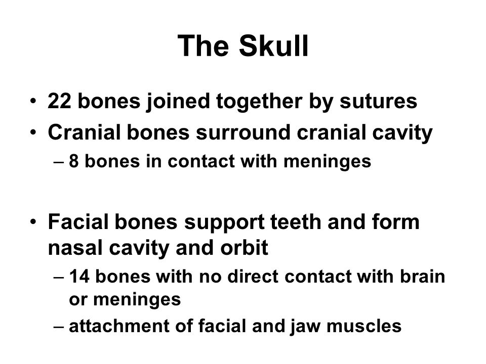 Cartilaginous Joint -- Symphysis 2 bones joined by fibrocartilage Only slight amount of movement is possible