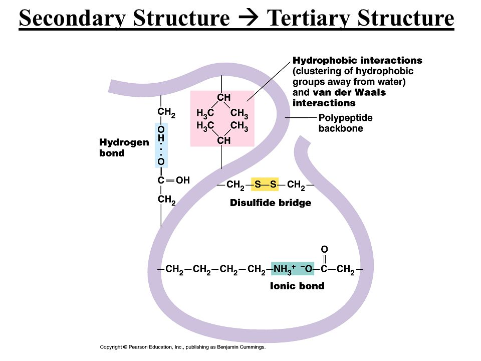 Secondary Structure  Tertiary Structure
