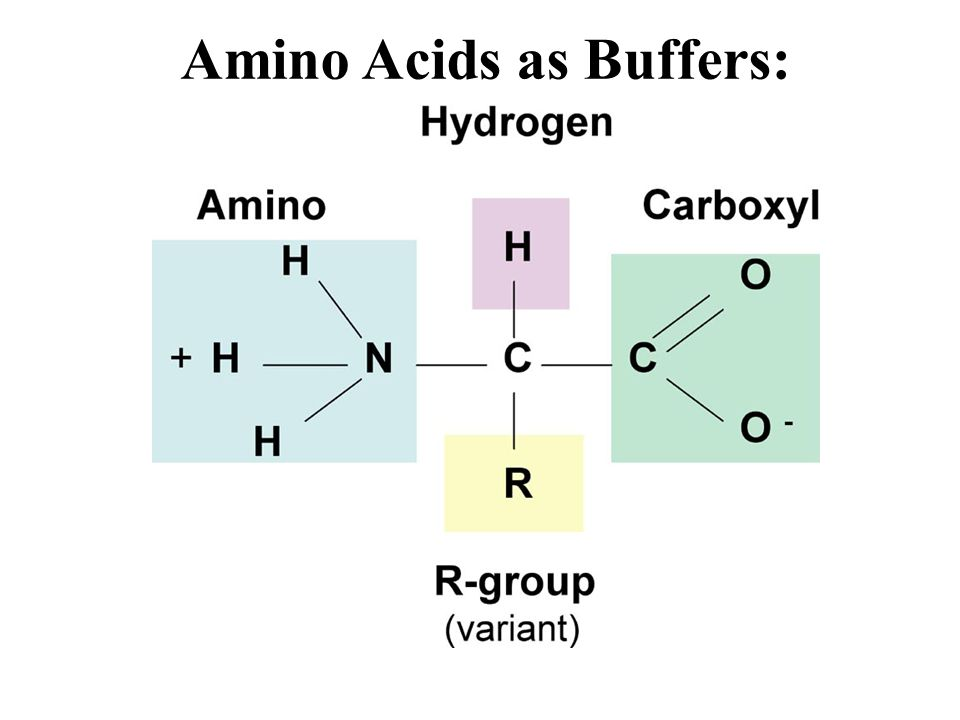Amino Acids as Buffers: