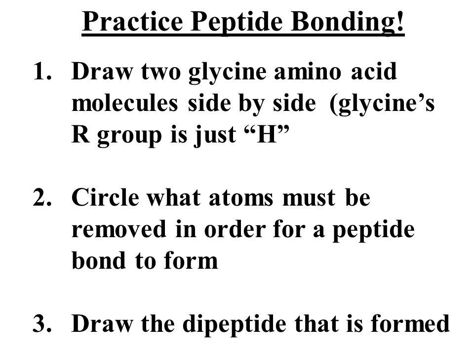 Practice Peptide Bonding.