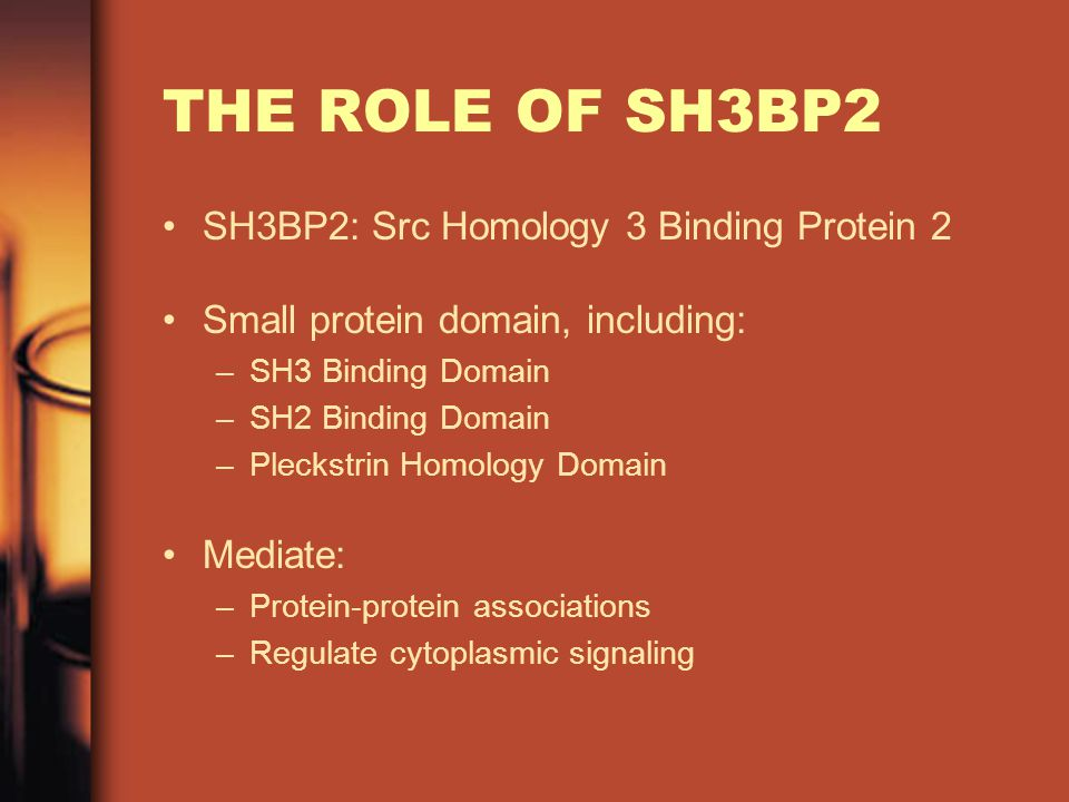 THE ROLE OF SH3BP2 SH3BP2: Src Homology 3 Binding Protein 2 Small protein domain, including: –SH3 Binding Domain –SH2 Binding Domain –Pleckstrin Homology Domain Mediate: –Protein-protein associations –Regulate cytoplasmic signaling