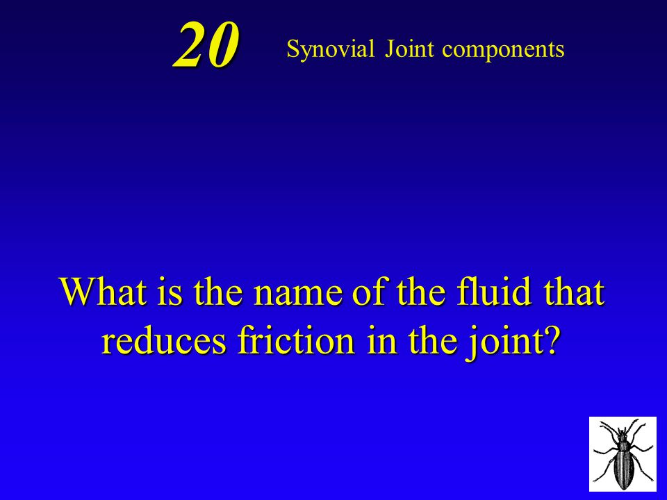 *Joint Capsule 10 Synovial Joint components