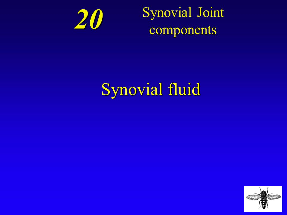 20 What is the name of the fluid that reduces friction in the joint? Synovial Joint components