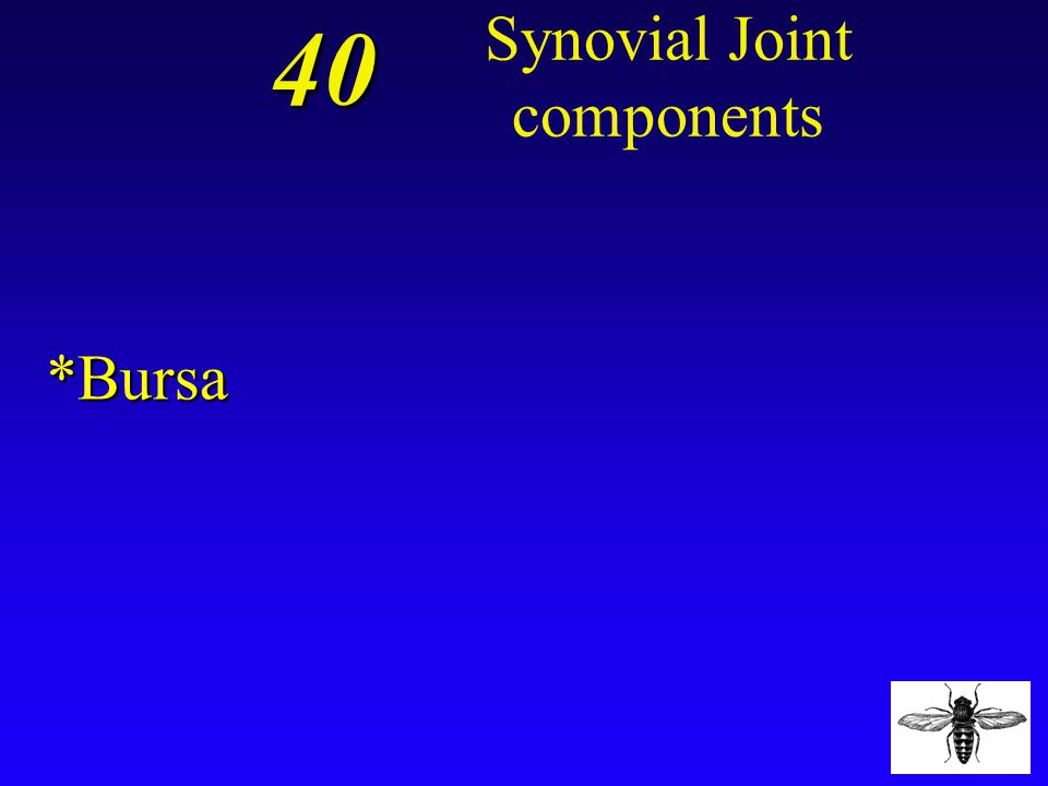 40 ? What is defined as a small packet of connective tissue containing synovial fluid, which reduces friction in a joint and acts as a shock absorber?