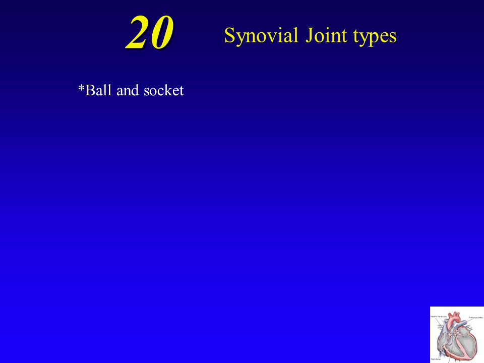 20 Synovial Joint types .
