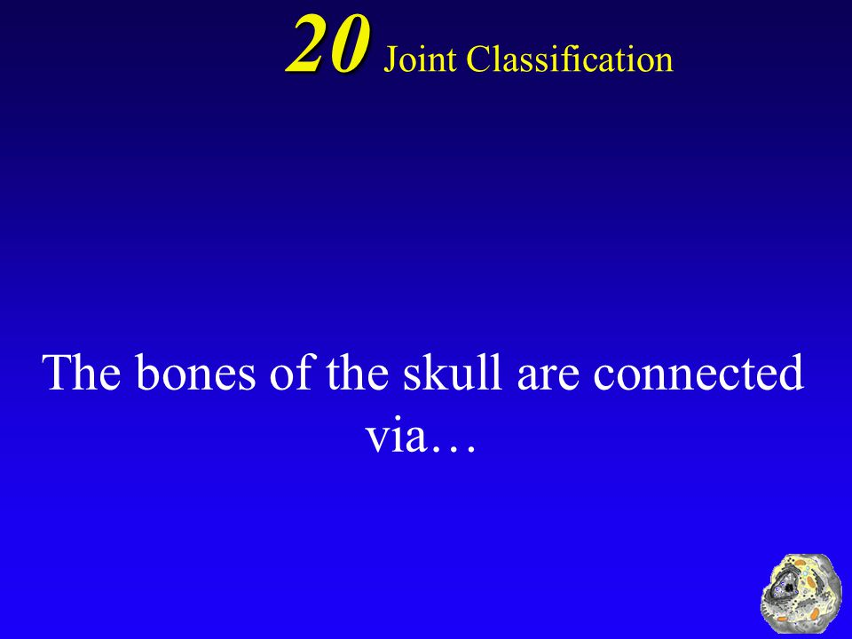 10 Amphiarthrosis Joint Classification