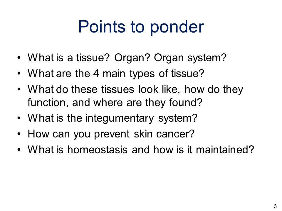 3 Points to ponder What is a tissue.Organ. Organ system.