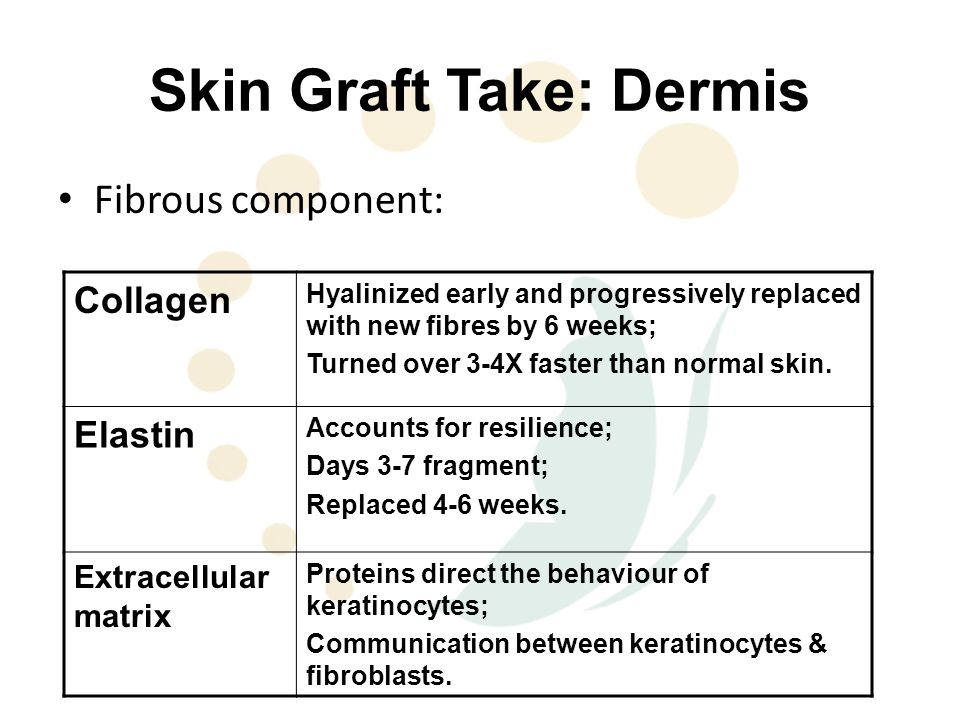 Skin Graft Take: Dermis Fibrous component: Collagen Hyalinized early and progressively replaced with new fibres by 6 weeks; Turned over 3-4X faster than normal skin.