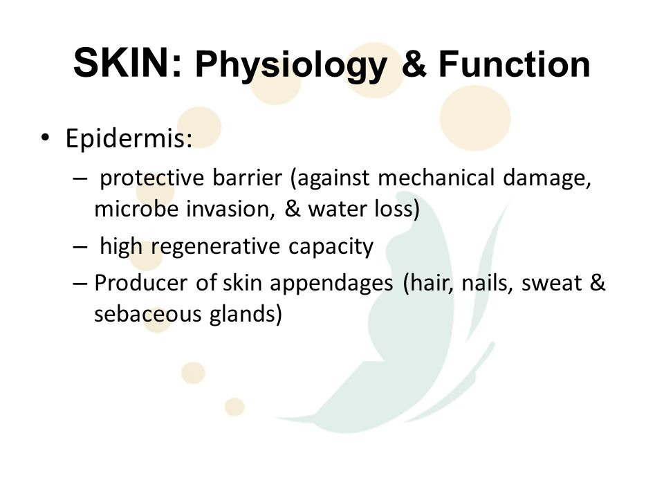SKIN: Physiology & Function Epidermis: – protective barrier (against mechanical damage, microbe invasion, & water loss) – high regenerative capacity – Producer of skin appendages (hair, nails, sweat & sebaceous glands)