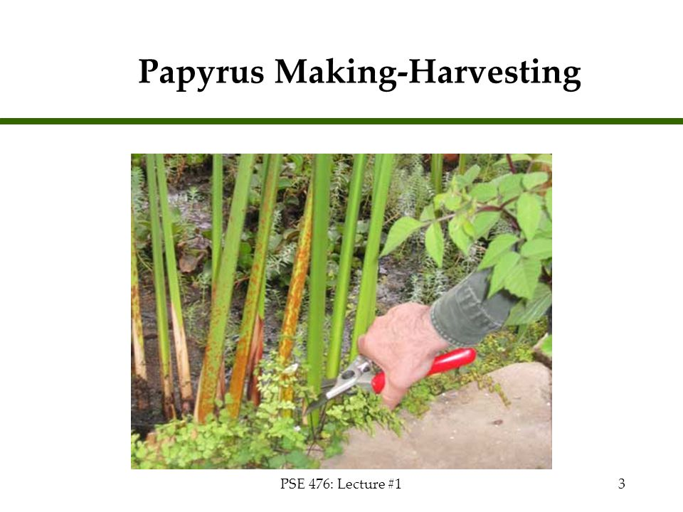 PSE 476: Lecture #13 Papyrus Making-Harvesting