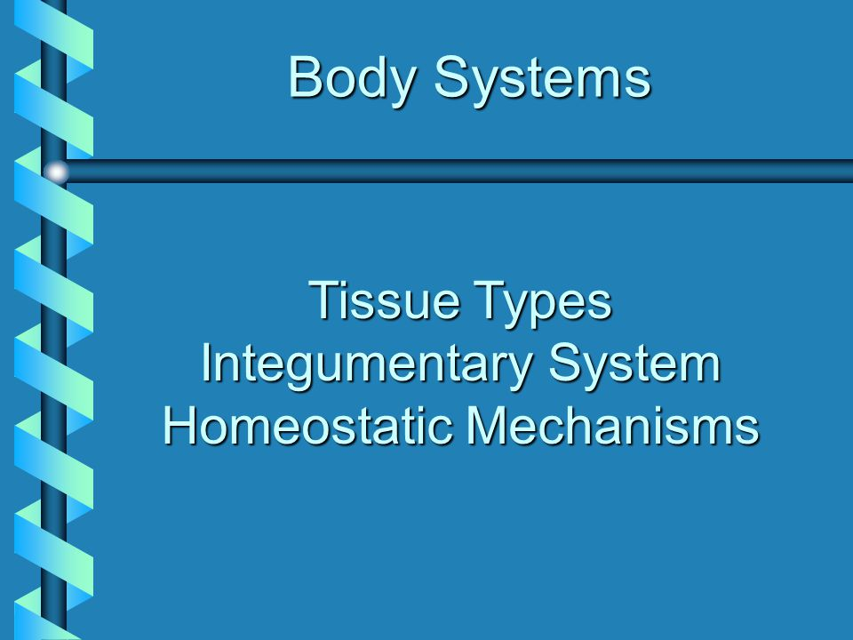 Four Major Tissue Types Connective: binds and supports body partsConnective: binds and supports body parts Muscular: allows movementMuscular: allows movement Nervous: receives stimuli and conducts impulsesNervous: receives stimuli and conducts impulses Epithelial: covers body surfaces, lines body cavitiesEpithelial: covers body surfaces, lines body cavities
