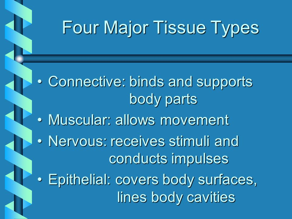 Three Components of Connective Tissue Specialized cells Ground Substance: Non-cellular material separating cells Protein Fibers collagen elastic fiber reticular fiber
