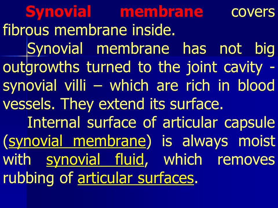 Synovial membrane covers fibrous membrane inside.