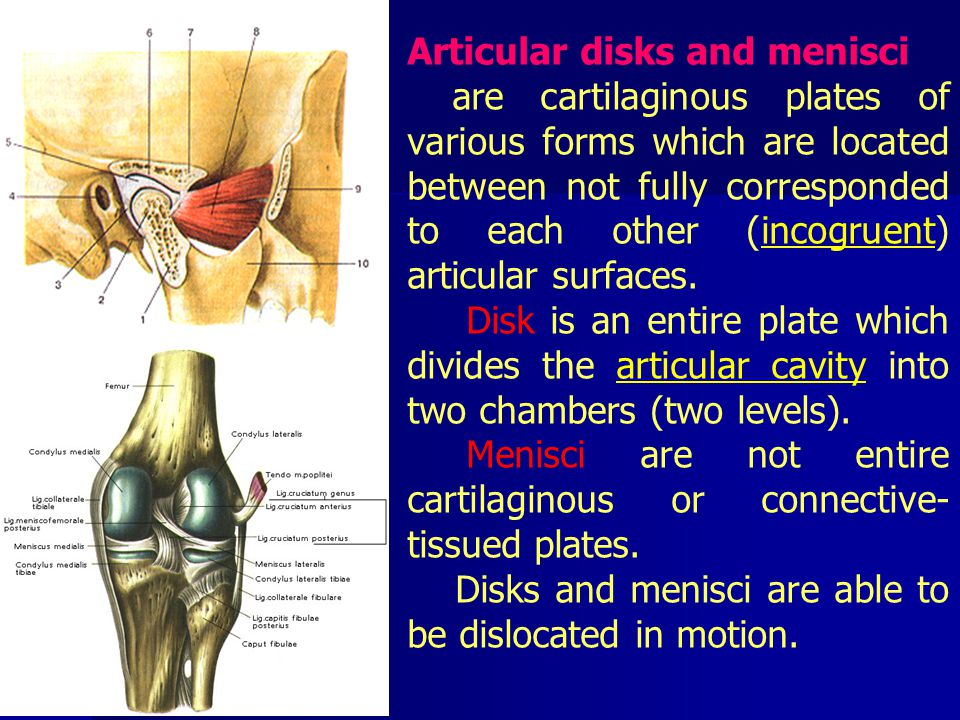 Articular disks and menisci are cartilaginous plates of various forms which are located between not fully corresponded to each other (incogruent) articular surfaces.