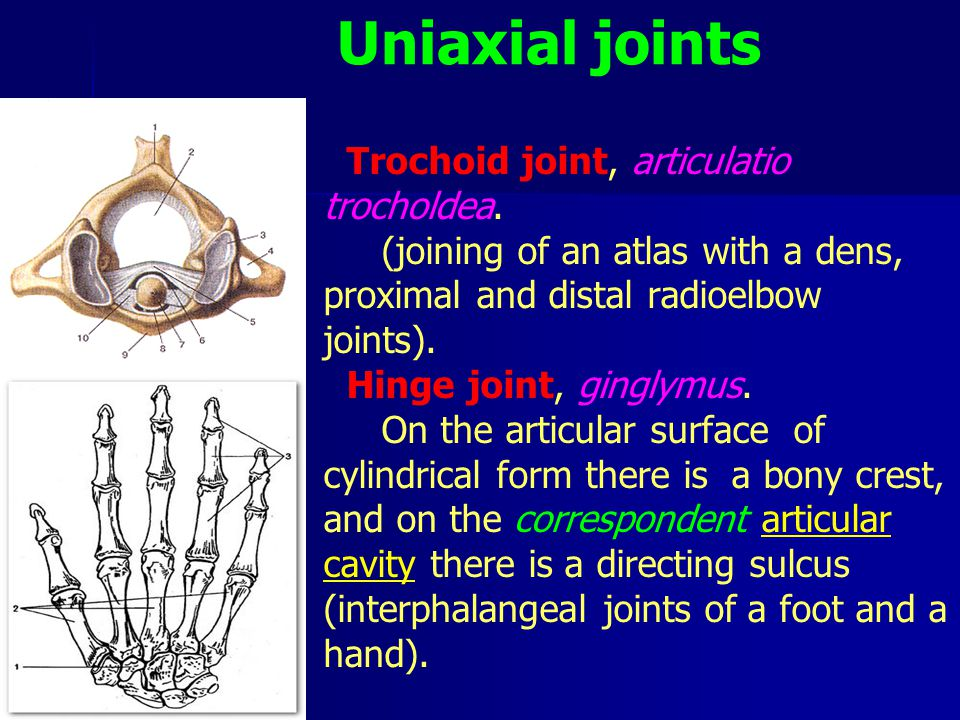 Uniaxial joints Trochoid joint, articulatio trocholdea.