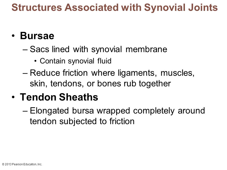 © 2013 Pearson Education, Inc. Structures Associated with Synovial Joints Bursae –Sacs lined with synovial membrane Contain synovial fluid –Reduce fri