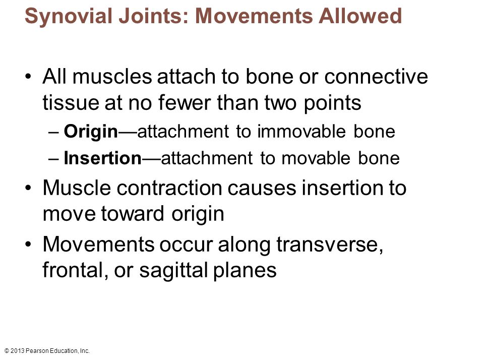 © 2013 Pearson Education, Inc. Synovial Joints: Movements Allowed All muscles attach to bone or connective tissue at no fewer than two points –Origin—