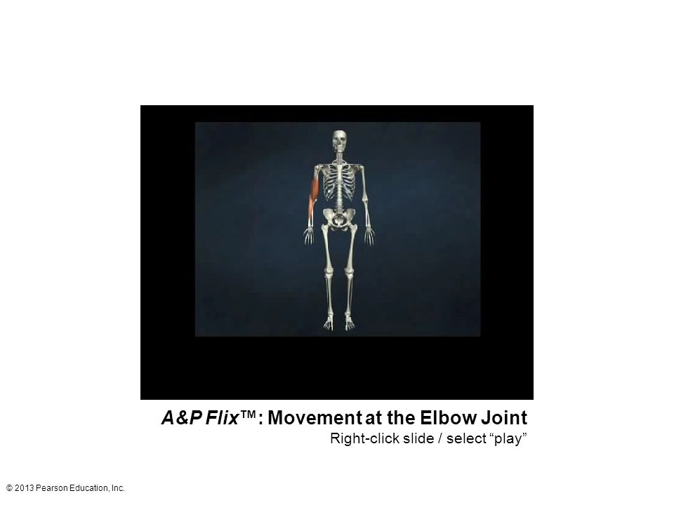 """© 2013 Pearson Education, Inc. A&P Flix™: Movement at the Elbow Joint Right-click slide / select """"play"""""""