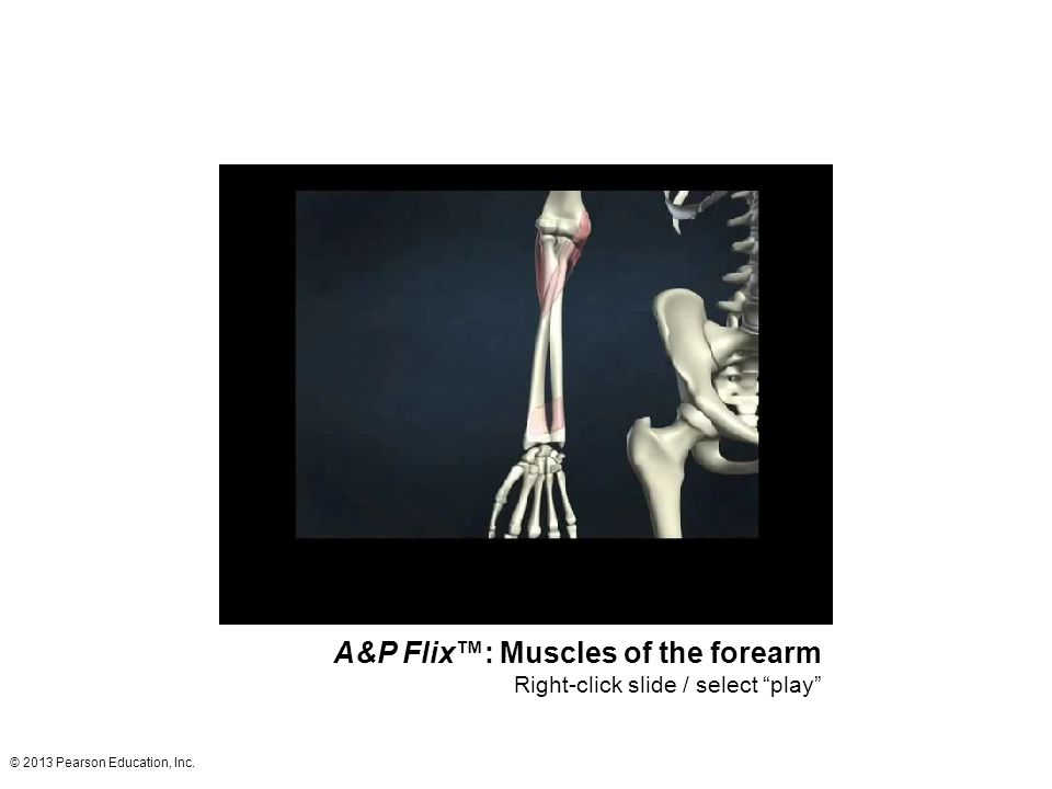 """© 2013 Pearson Education, Inc. A&P Flix™: Muscles of the forearm Right-click slide / select """"play"""""""