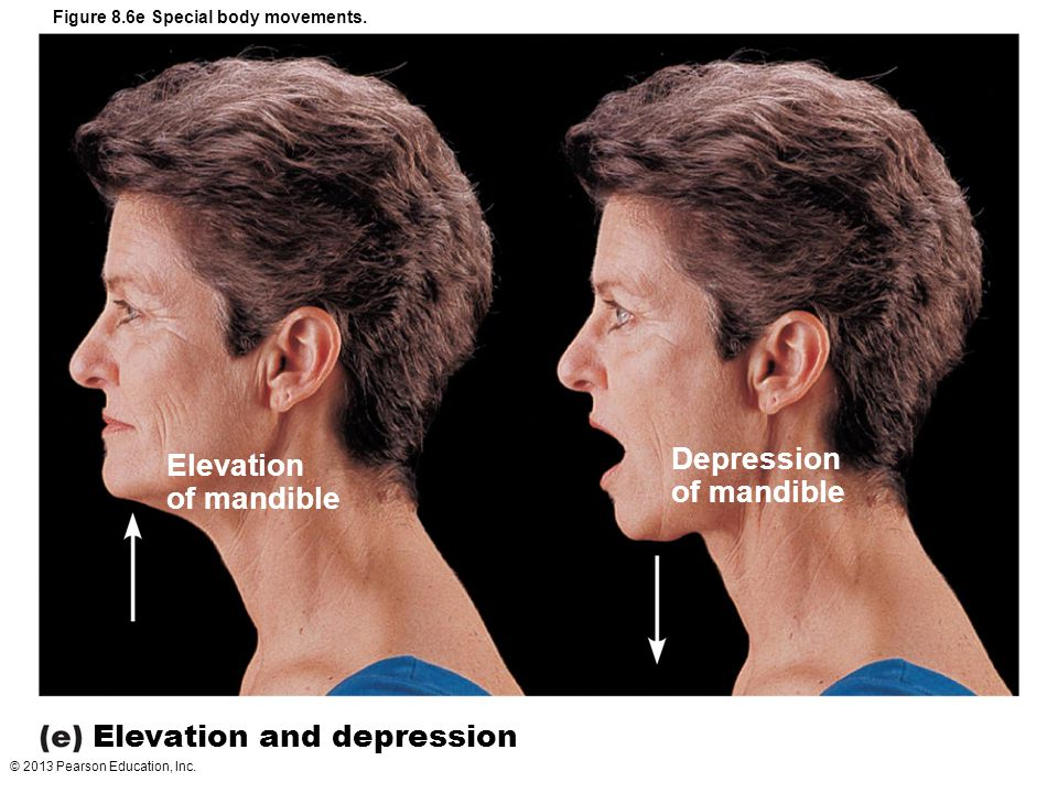 © 2013 Pearson Education, Inc. Figure 8.6e Special body movements. Elevation of mandible Depression of mandible Elevation and depression