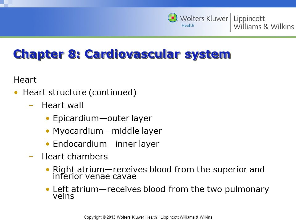 Copyright © 2013 Wolters Kluwer Health | Lippincott Williams & Wilkins Chapter 8: Cardiovascular system Blood flow Blood vessels –Five types: Arteries—thick, muscular walls; accommodate higher speed blood flow and pressure Arterioles—thinner walls than arteries; constrict or dilate to control blood flow to capillaries Capillaries—have walls made up of a single layer of endothelial cells Venules—thin walls; gather blood from the capillaries Veins—thin walls but large diameters; return blood to the heart