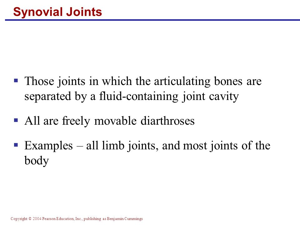 Copyright © 2004 Pearson Education, Inc., publishing as Benjamin Cummings Synovial Joints  Those joints in which the articulating bones are separated