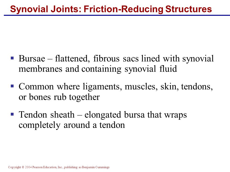 Copyright © 2004 Pearson Education, Inc., publishing as Benjamin Cummings Synovial Joints: Friction-Reducing Structures  Bursae – flattened, fibrous