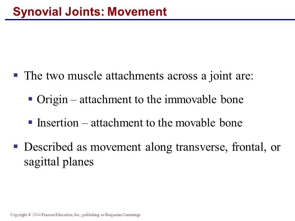 Copyright © 2004 Pearson Education, Inc., publishing as Benjamin Cummings Synovial Joints: Movement  The two muscle attachments across a joint are: 